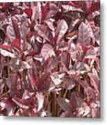 Purple Foliage Metal Print