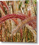 Purple Fountain Grass Abstract By H H Photography Of Florida Metal Print