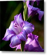 Purple Glads Metal Print