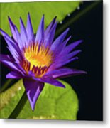 Purple Gold Metal Print