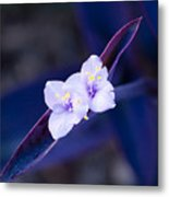 Purple Heart Flowers Metal Print