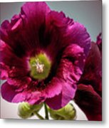 Purple Hollyhock Metal Print