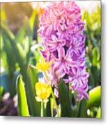 Purple Hyacinth Metal Print
