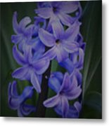 Purple Hyacinths - 2015 D Metal Print