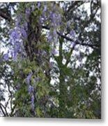 Purple In The Trees Metal Print