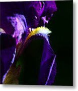 Purple Iris 2 Metal Print