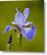 Purple Iris 2 Metal Print