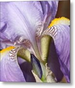 Purple Iris Beauty Metal Print