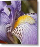 Purple Iris Closeup Metal Print
