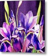 Purple Iris Dance  Metal Print