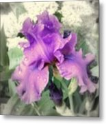 Purple Iris In Focal Black And White Metal Print