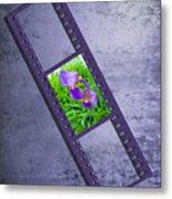 Purple Iris Passion Metal Print