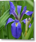 Purple Iris With Insect Metal Print