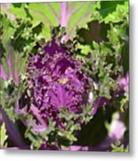 Purple Kale Metal Print