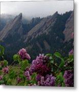 Purple Lilacs Flatirons Metal Print