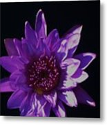 Purple Lily Monet Metal Print