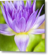 Purple Lotus Blossom Metal Print