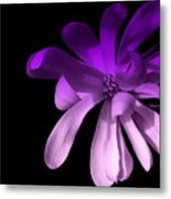 Purple Magnolia 2 Metal Print