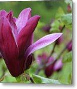 Purple Magnolia Closeup Metal Print