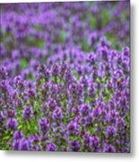 Purple Meadow 3 Metal Print