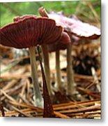 Purple Mushroom 2 Metal Print