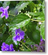 Purple On Green With Raindrops Metal Print