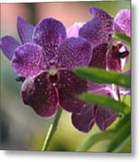 Purple Orchid Beauty Metal Print