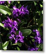 Purple Orchid Plant Metal Print