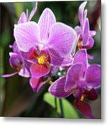 Purple Orchids 2 Metal Print