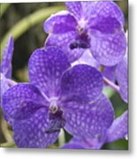 Purple Orchids Metal Print