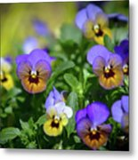 Purple Pansies Metal Print