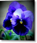 Purple Pansy - 8x10 Metal Print