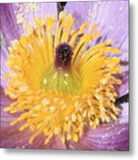 Purple Pasque Flower With Pollen Metal Print