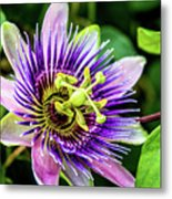 Purple Passion Bloom Metal Print