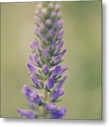 Purple Perfection Metal Print