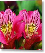 Purple Peruvian Lily Metal Print