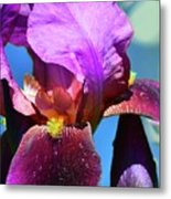 Purple Petals Four  Metal Print