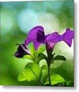 Purple Petunia On A Cool Spring Day Metal Print