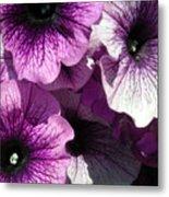 Purple Petunia Paradise Metal Print