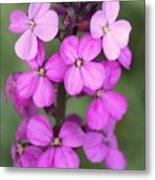 Purple Pink Flower.... Metal Print