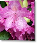 Purple Pink Horizontal Metal Print
