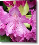 Purple Pink Metal Print