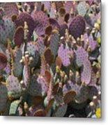 Purple Prickly Pear 2 Metal Print
