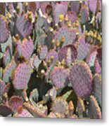 Purple Prickly Pear 3 Metal Print