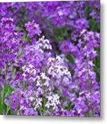 Purple Profusion Metal Print