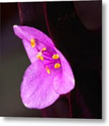 Purple Queen Metal Print