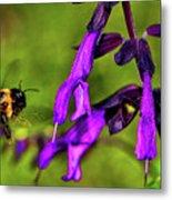 Purple Salvia 002 Metal Print