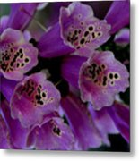 Purple Silk Metal Print