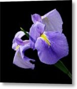 Purple Simplicity Metal Print