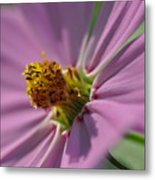 Purple Soft Petals Metal Print